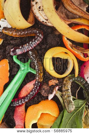 kitchen scraps  in compost soil  pile  surface