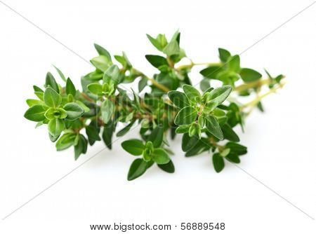 Thyme spice