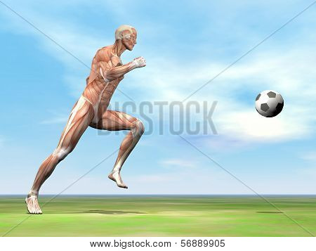 Muscles of soccer player - 3D render