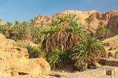 picture of oasis  - Famous Mountain oasis Chebika in Tunisia - JPG