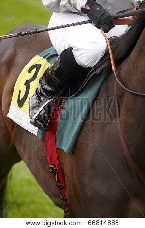 Race Horse And Jockey Ready To Run