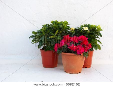Three Pots Of Flowers At A White Wall Of The Village
