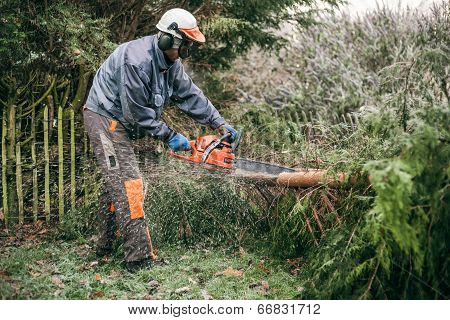 Professional Gardener Using Chainsaw