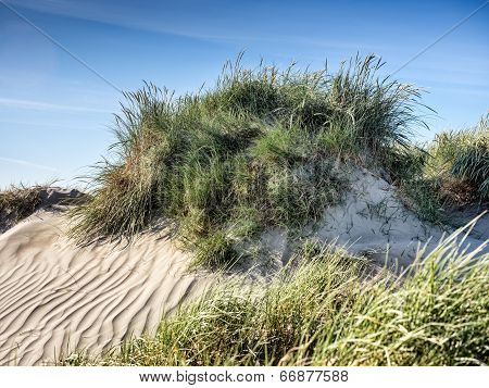 Dune On Rindby Beach On The Island Fanoe