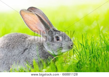 Portrait Of Gray Rabbit