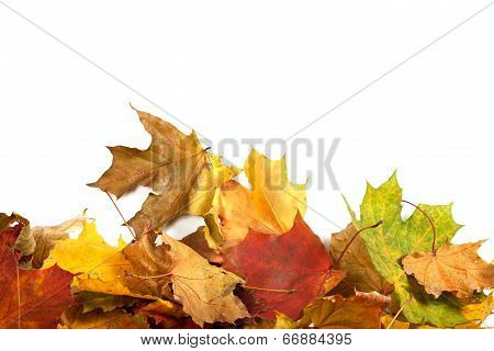 Autumn Maple-leaf Background