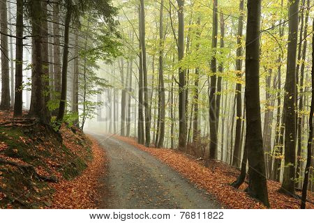 Misty autumnal forest