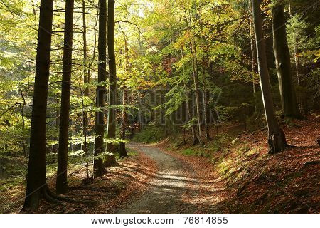 Trail through autumn forest