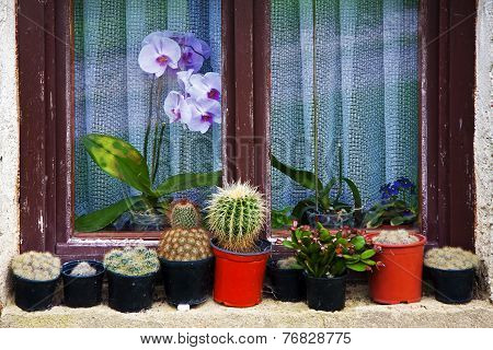 Flower Pots On The Window