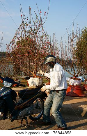 Asian Culture, Peach Blossom, Vietnamese Flowerpot