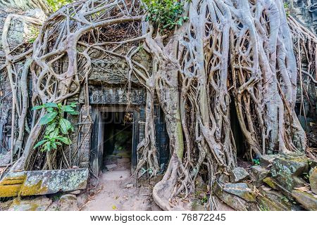 tree roots around door at Ta Prohm Angkor Wat Cambodia