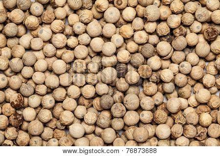 Teak seed untreated (tectona grandis )