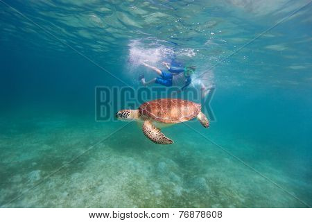 Underwater photo of family mother and son snorkeling and swimming with Hawksbill sea turtle