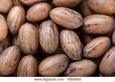 Pecan Nuts In Shells