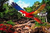 stock photo of parrots  - Colourful flying parrot in tropical landscape - JPG