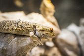 foto of lizard skin  - scaly lizard skin resting in the sun - JPG