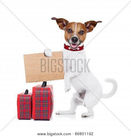 Hitchhiker Dog