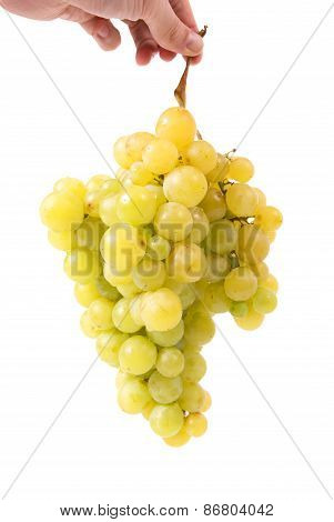 Hand Holding Bunch Of Grapes