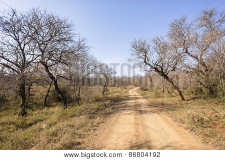 Dirt Road Trees Wilderness