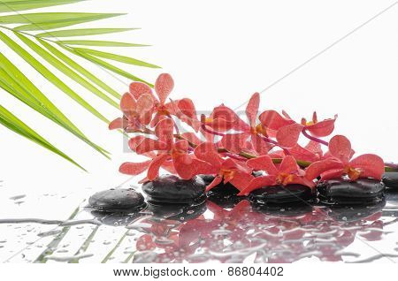 Lying down branch orange orchid with stones and palm