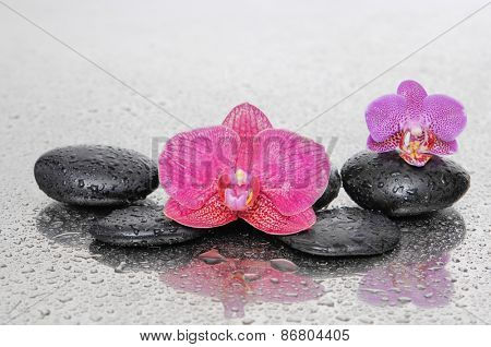 Red and pink orchid and wet black stones on wet