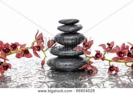 Orchid and wet black stacked stones on wet background