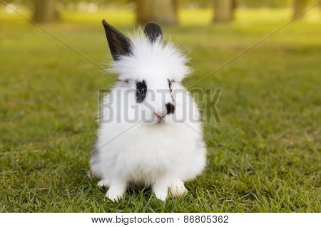 White And Black Fluffy Baby Rabbit On Green Grass In Park