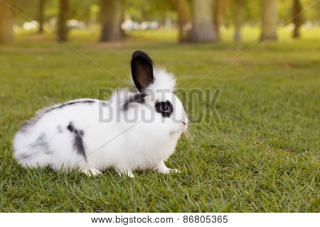 White And Black Funny Fluffy Small Baby Rabbit On Green Grass In Park I