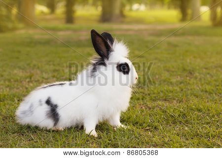 White And Black Fluffy Small Baby Rabbit On Green Grass In Park
