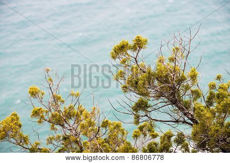 Mediterranean Vegetation On A Cliff On The Sea