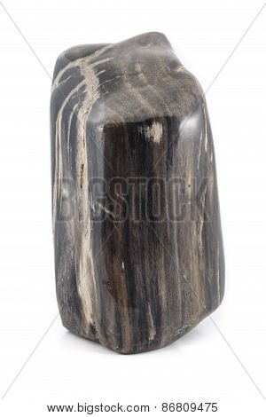 Petrified Wood Ancient Piece Black Sideview