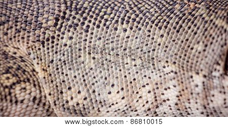 Texture Of Nile Monitor Skin