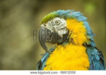 Macaw Sitting On A Branch.