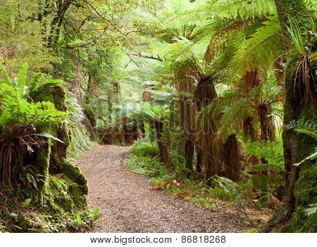 Road in temperate rain forest,  Te Urewera National Park, North Island, New Zealand