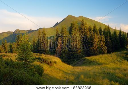 Mountain landscape in the evening. Spruce forest on the slopes. Road in the mountains