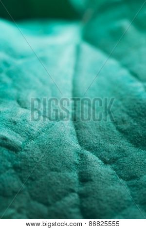 abstract autumnal background: close up of green leaf
