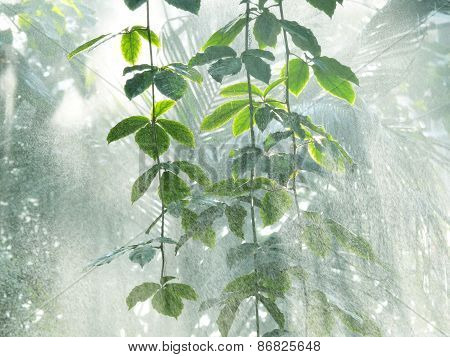 amazon rain