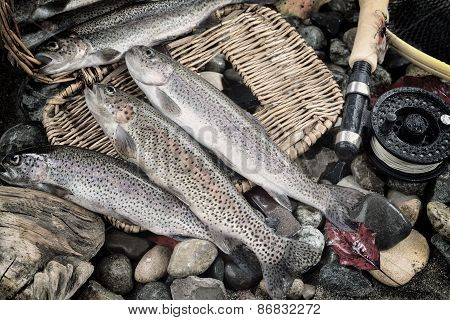Trout Fishing In Vintage Concept