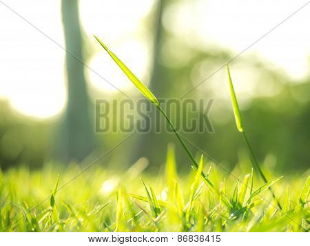 The Shinig Grass Under The Sunlight