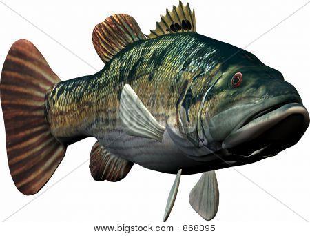 Vissen zwemmen naar u