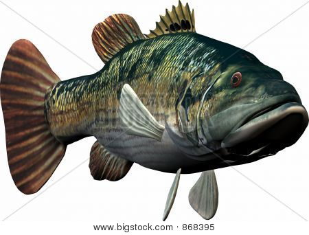 Fish Swimming Towards You