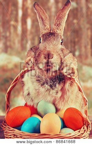 Easter rabbit outdoor