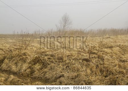 Lithuanian Fields In The Morning