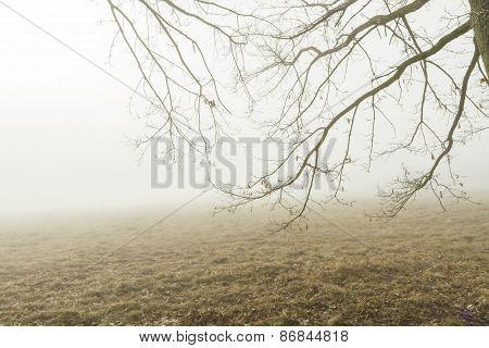 Fog From Branch