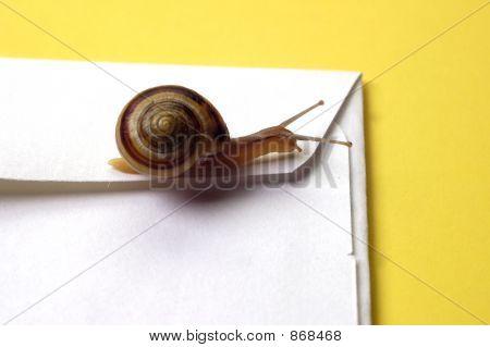Snail Mail Concept