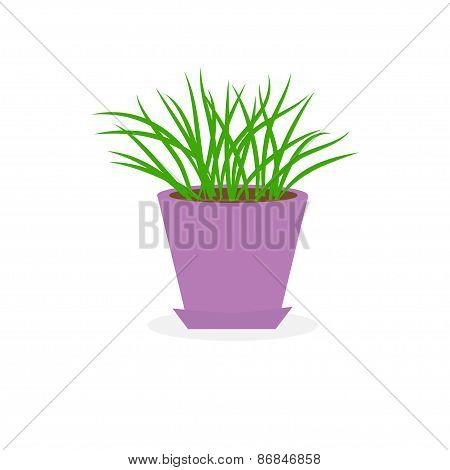 Grass Growing In Violet Flower Pot Icon Isolated White Background Flat Design
