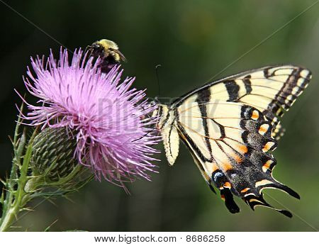 butterfly and bee on flower
