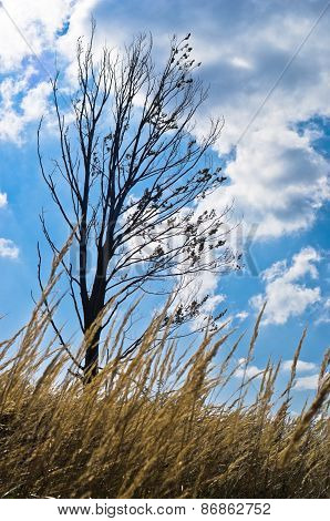 Dry prairie grass and a tree against blue sky with white clouds at sunny autumn afternoon