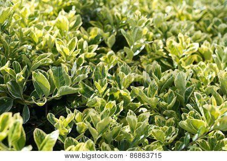 Green close-up bush leaves