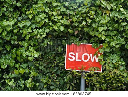 Red slow sign in a bushes